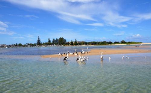 澳大利亚联邦政府推移民新政:地区性签证申请将提速