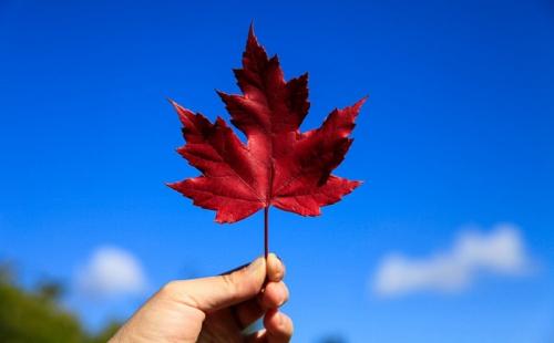 申请加拿大技术移民两大优势